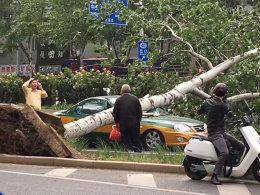 9级狂风沙尘肆虐京城 出租车被大树砸瘪